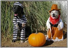 best Funny ideas for Halloween costumes